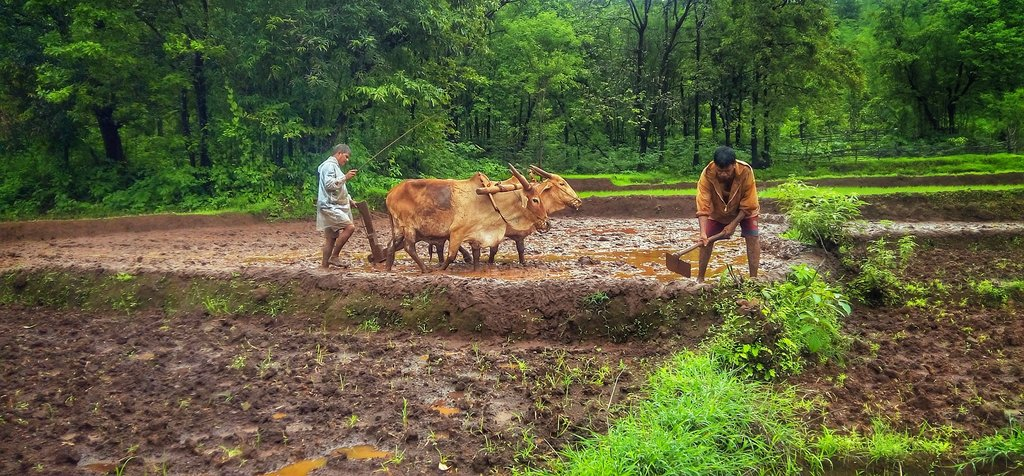 Goa_rizi%C3%A8re_nature_CC0.jpg?1548418350