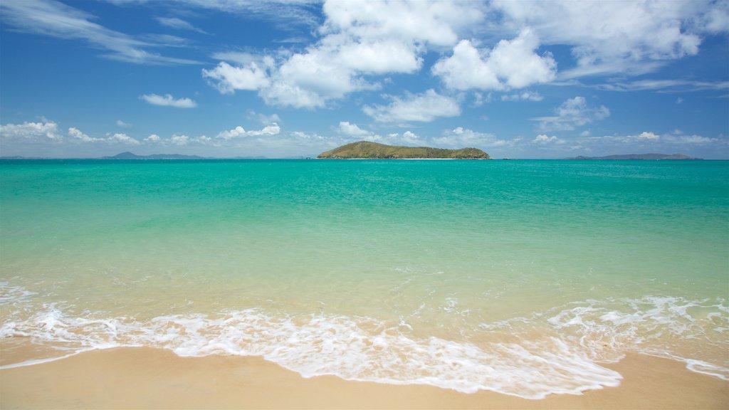 Isla Great Keppel mostrando escenas tropicales, vistas generales de la costa y una playa