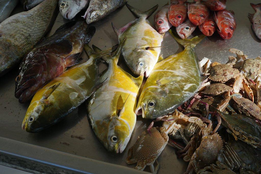 fish.jpg?1554113961