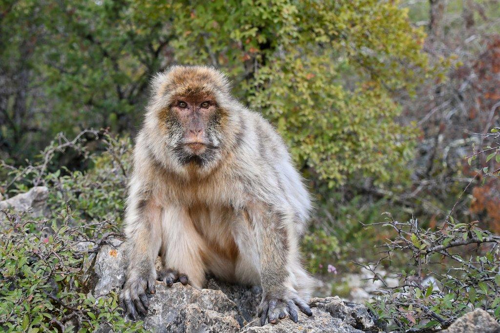 monkey-2790485_1920.jpg?1559814772
