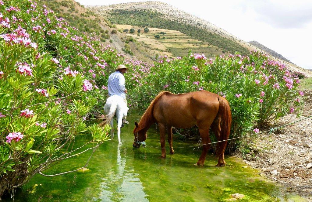 Oued_Zitoun.JPG?1560269495