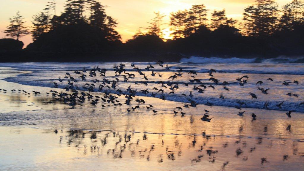 Chesterman Beach showing general coastal views, a sandy beach and bird life