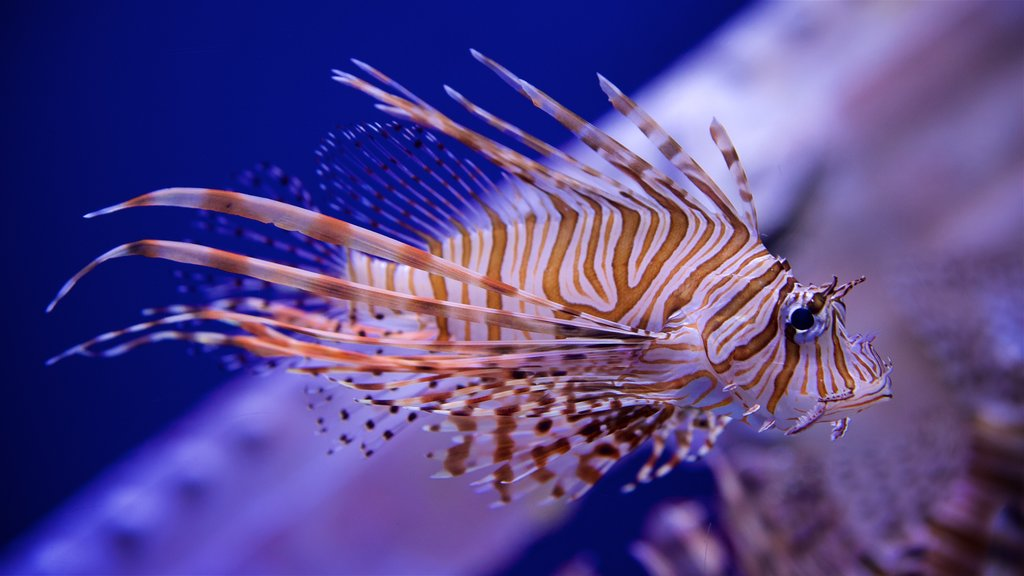 Ripley\'s Aquarium
