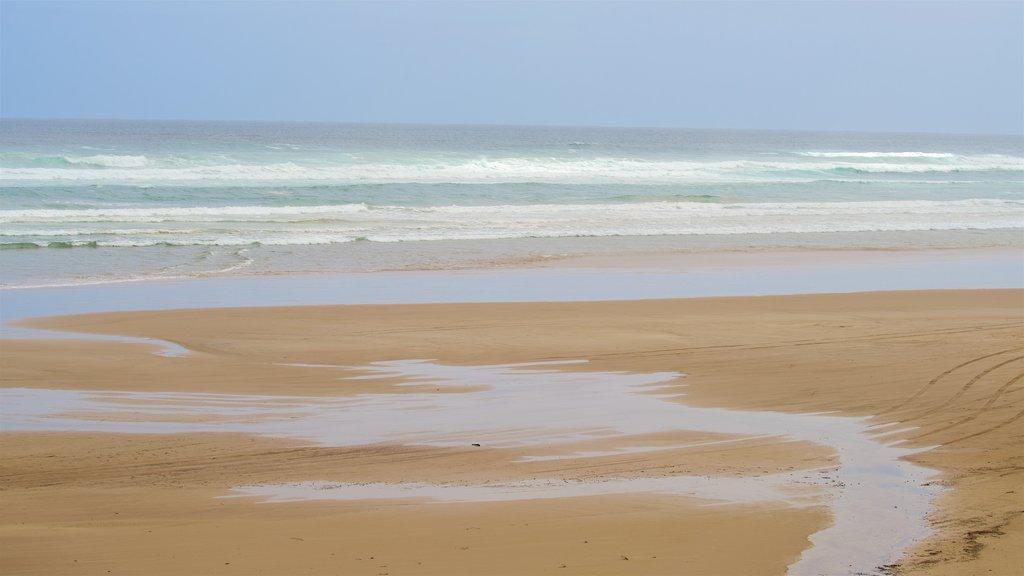 Ocean Beach featuring general coastal views and a sandy beach