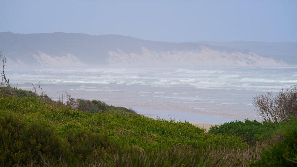 Ocean Beach which includes general coastal views