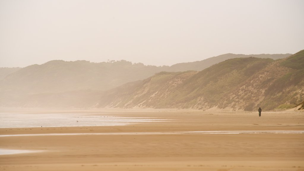 Ocean Beach featuring a sandy beach and general coastal views