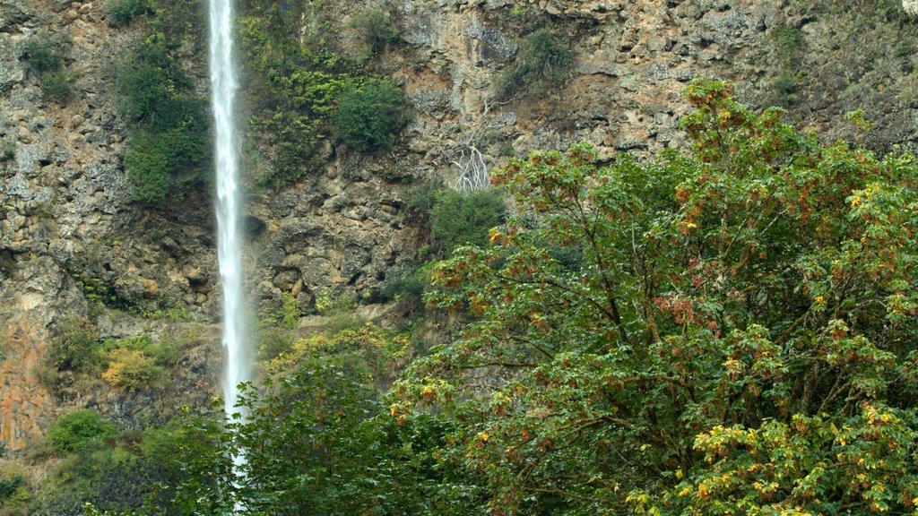 Cascadas de Multnomah ofreciendo una cascada