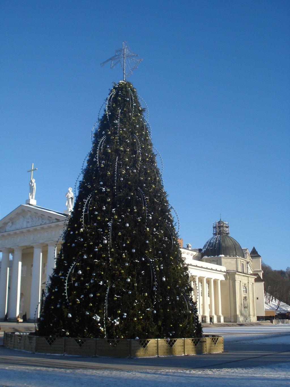 Vilnius_Christmas_tree_2008_by_day.jpg?1575385728