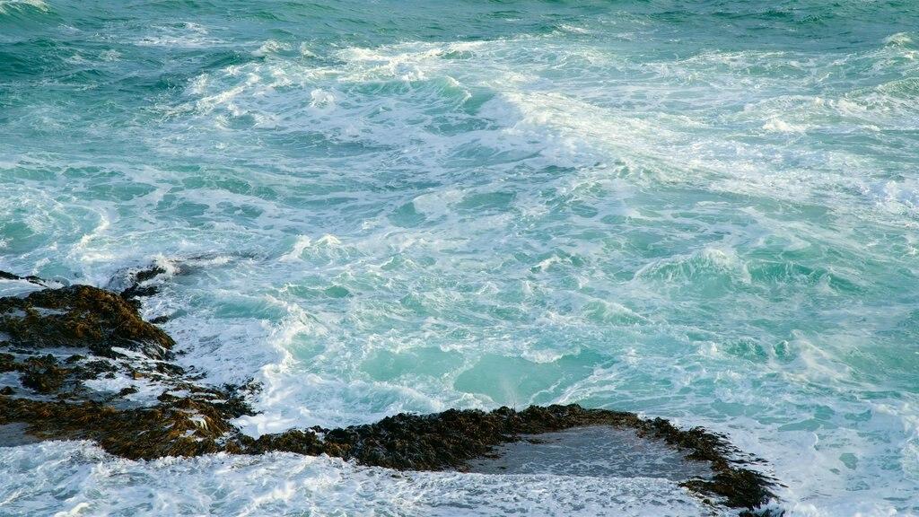 Warrnambool mostrando olas, una bahía o puerto y costa escarpada
