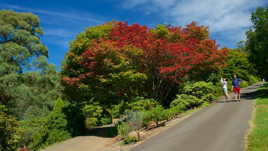 National Rhododendron Gardens featuring hiking or walking as well as a couple
