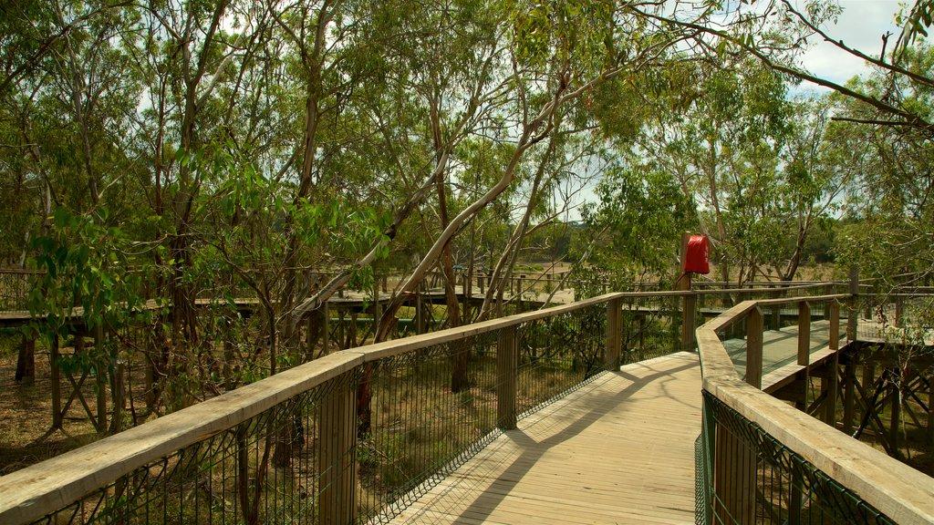 Phillip Island showing a garden