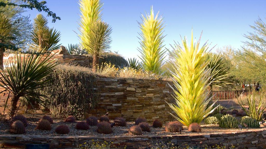 Desert Botanical Garden showing desert views and a garden
