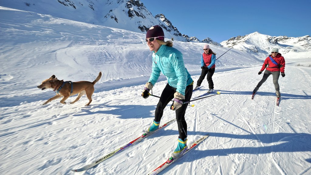 Talkeetna showing snow, cross country skiing and cuddly or friendly animals