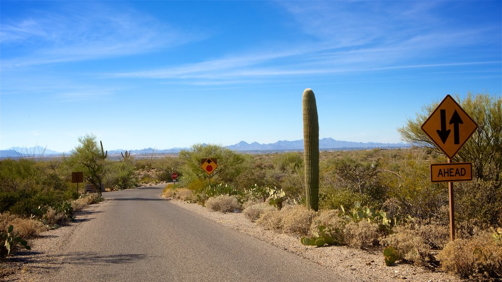 Saguaro National Park showing desert views