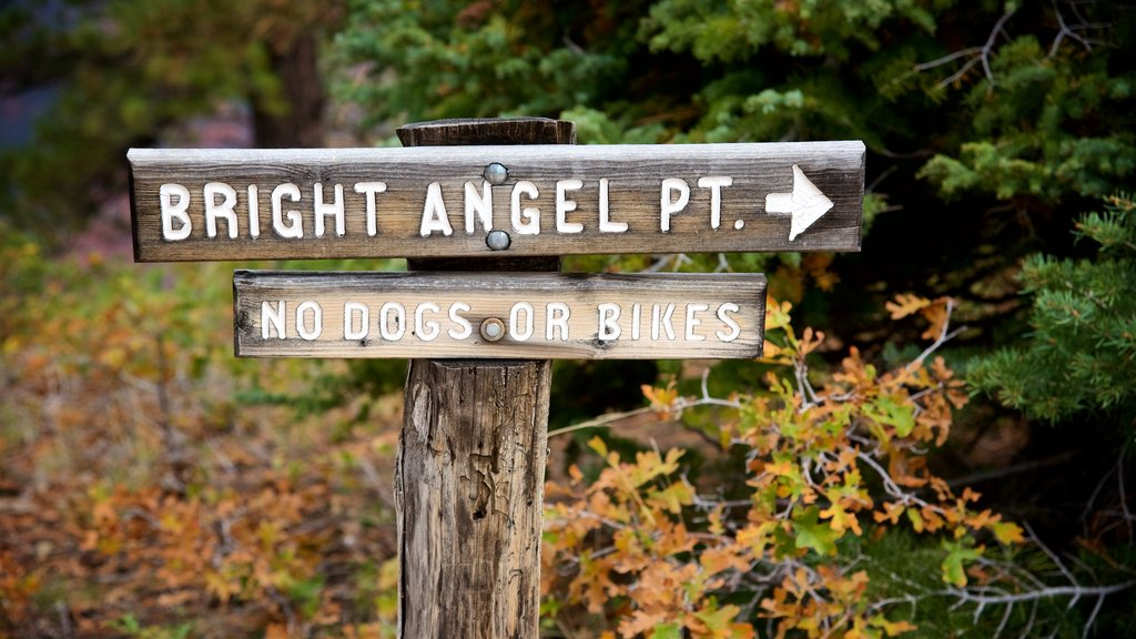 Bright Angel Trailhead which includes forests and signage