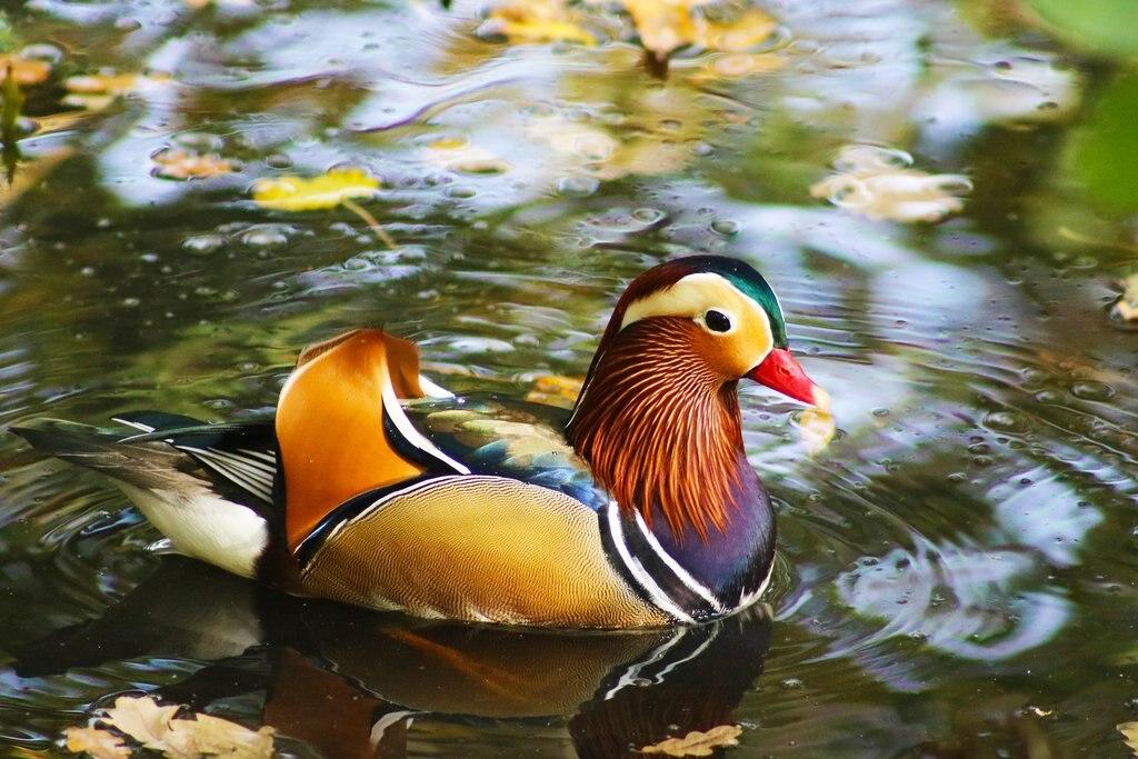 duck-4593589_1920.jpg?1579698777
