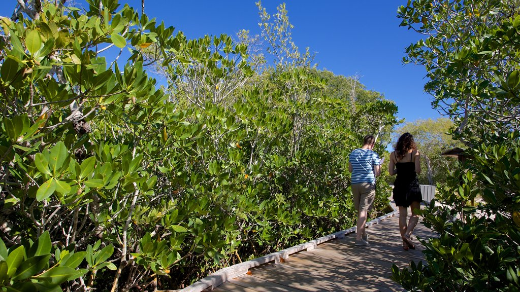 John Pennekamp Coral Reef State Park featuring mangroves as well as a couple
