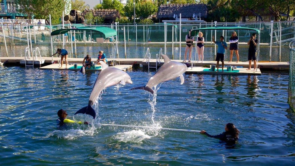 Dolphins Plus mostrando uma baía ou porto e vida marinha assim como um pequeno grupo de pessoas