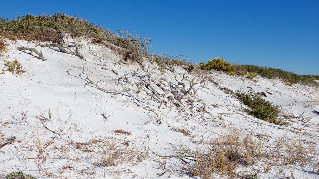 Grayton Beach State Park showing a sandy beach
