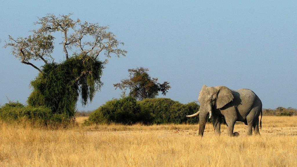 Botswana_%C3%A9l%C3%A9phant_CC0.jpg?1545666791