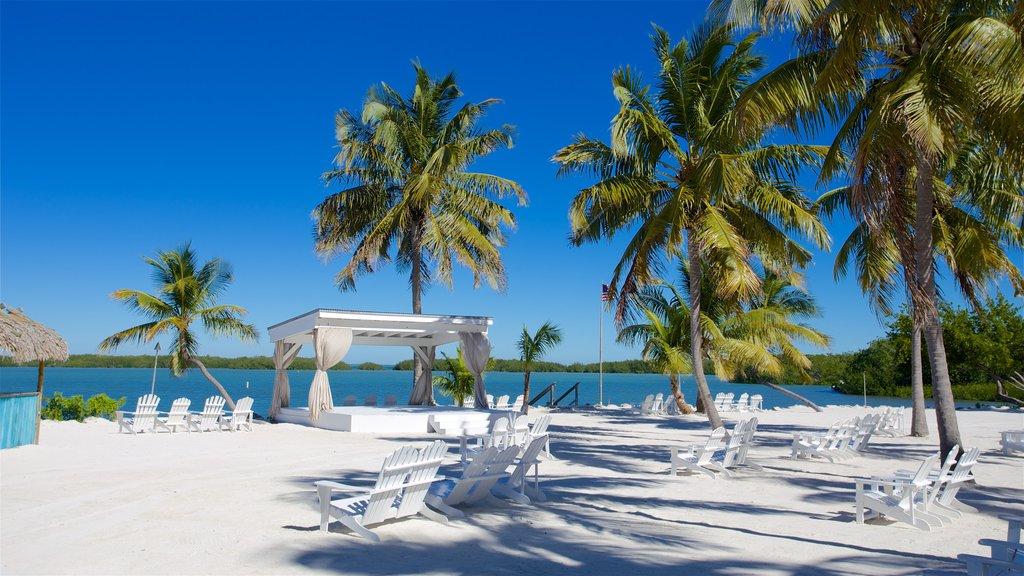 Islamorada showing a beach