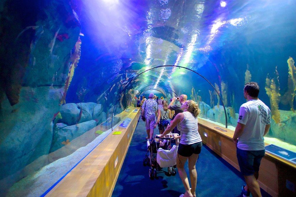The_Oceanografic_Aquarium.jpg?1580207433