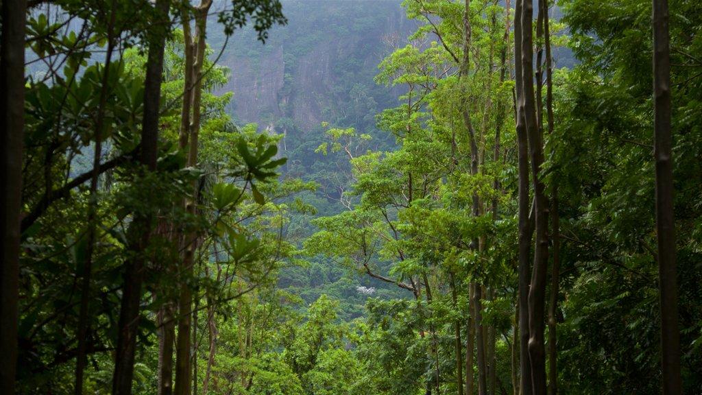 Rio de Janeiro Botanical Garden