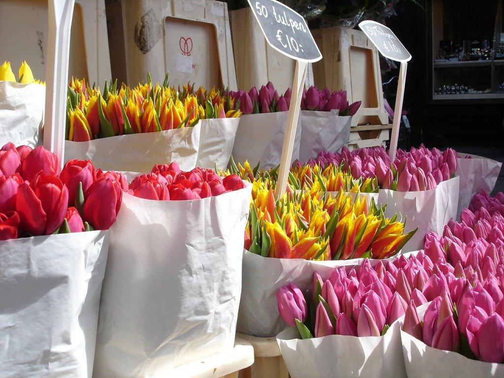 tulips.jpg?1580477760