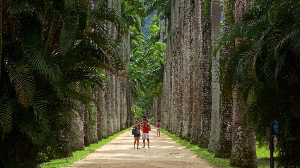 Jardim Botânico de São Paulo caracterizando um parque assim como um casal