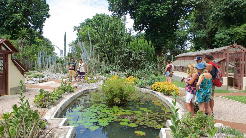 Jardim Botânico de São Paulo que inclui um jardim e um lago assim como um pequeno grupo de pessoas