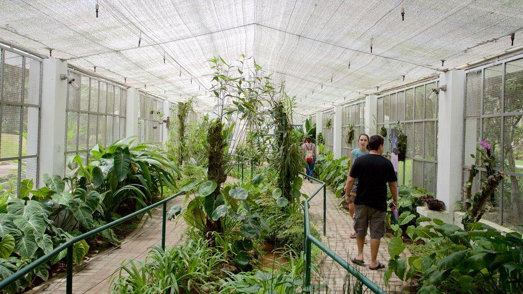 Jardim Botânico de São Paulo caracterizando vistas internas e um parque