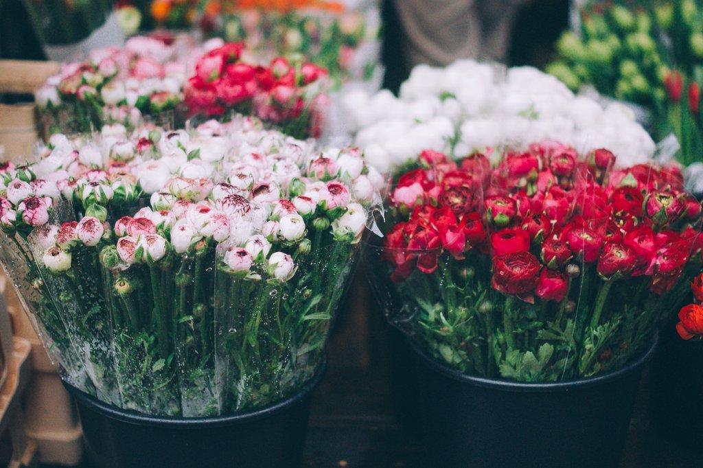 plant-flower-petal-tulip-green-red-121697-pxhere.com.jpg?1580984949