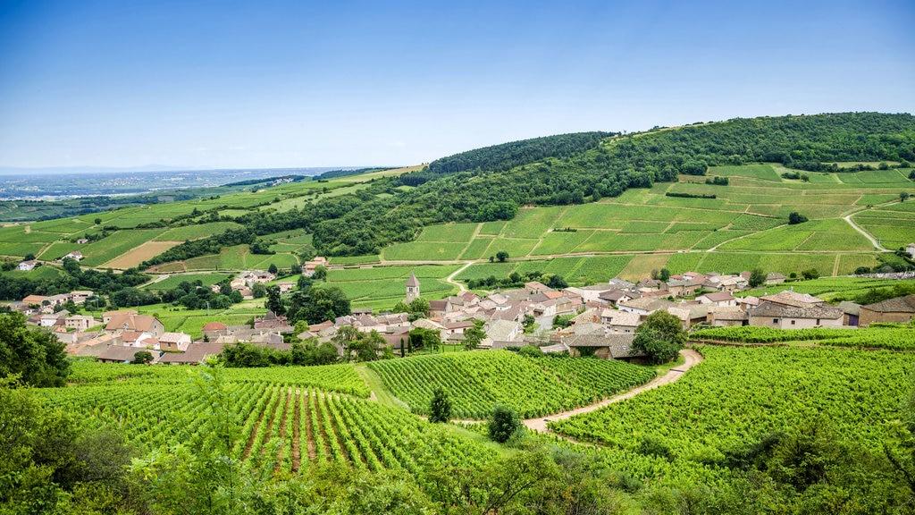 mercure-article-bourgogne-la-route-des-vins-du-maconnais-beaujolais-2500px.jpg?1579164588