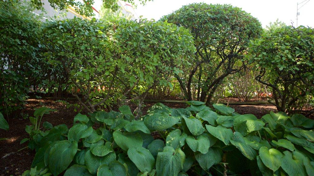 Rosemont ofreciendo un jardín