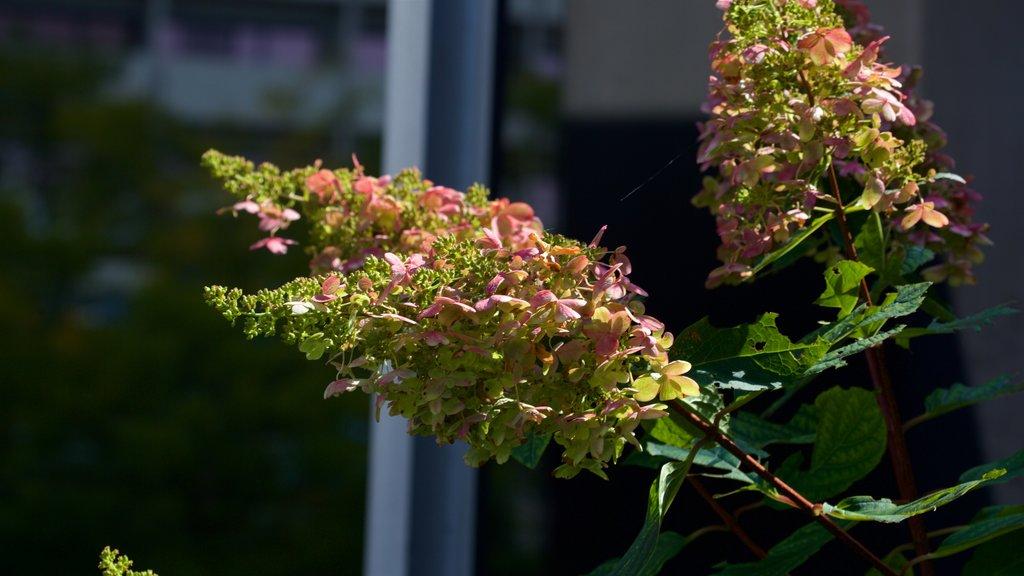 Rosemont que incluye flores