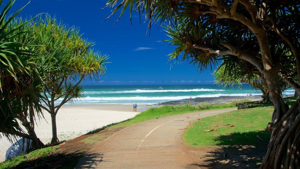 Shelly Beach which includes a beach