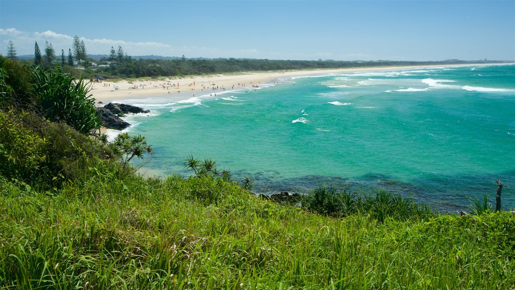 Tweed Heads showing mangroves and a beach