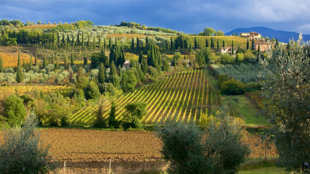 Montalcino showing tranquil scenes and farmland
