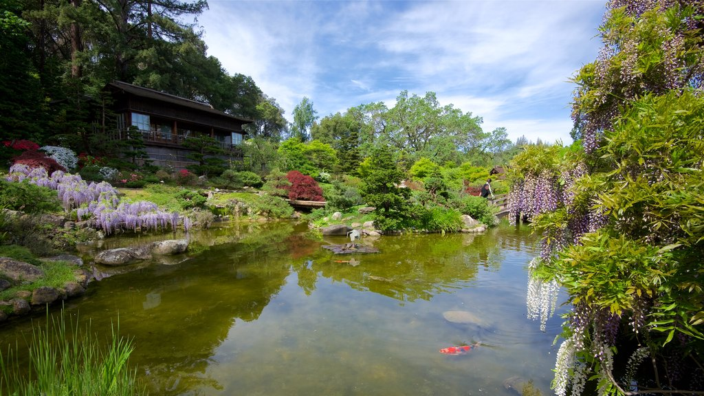 Hakone Gardens showing a park