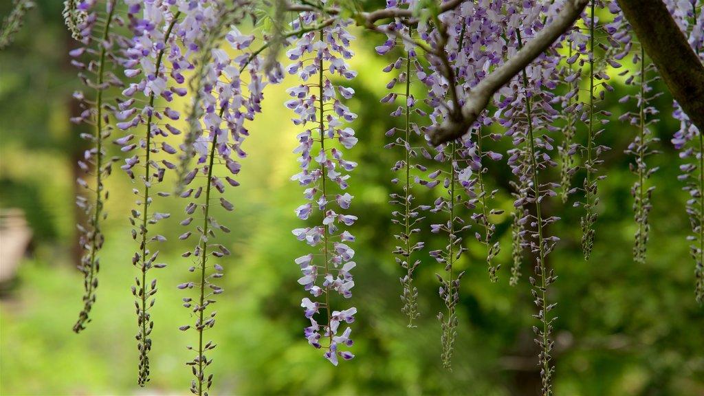 Hakone Gardens featuring a garden