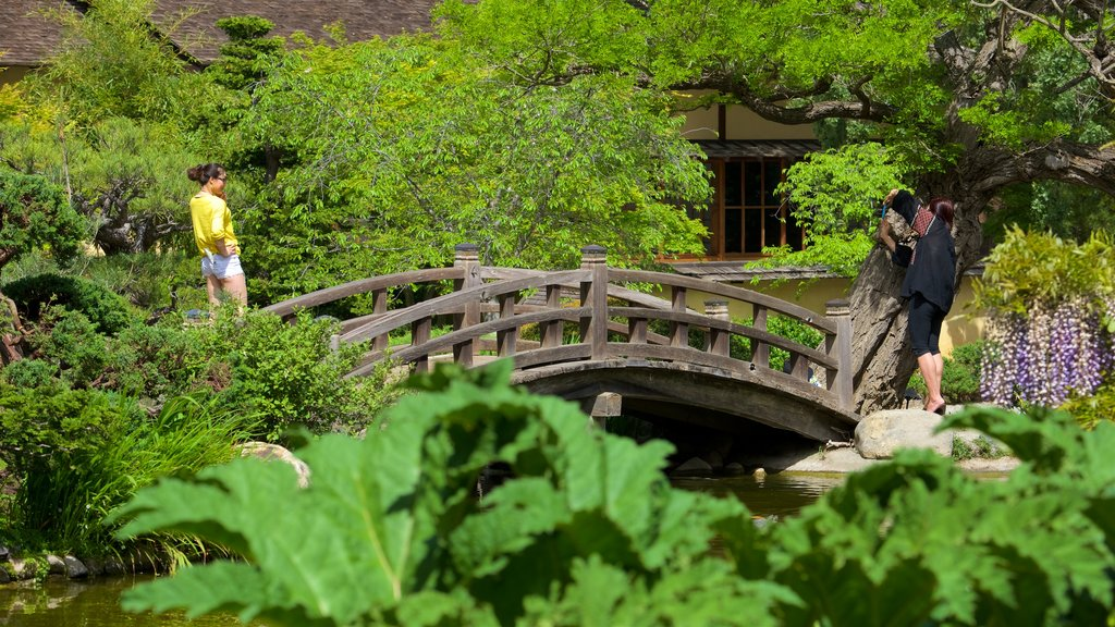 Hakone Gardens which includes a garden