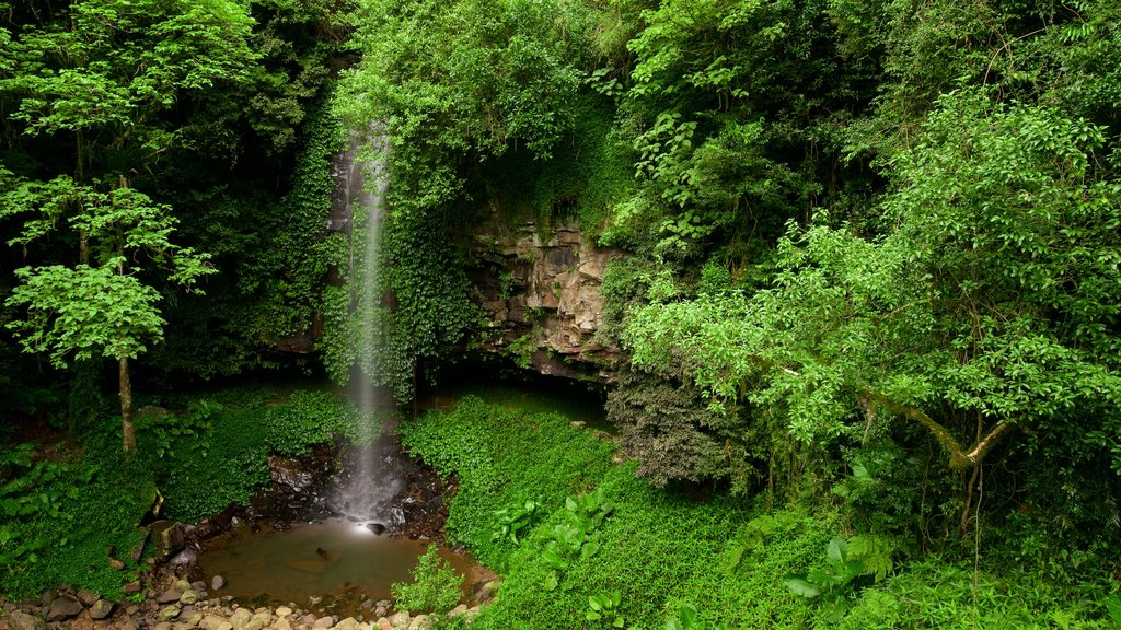 Dorrigo Mountain showing a waterfall and forests