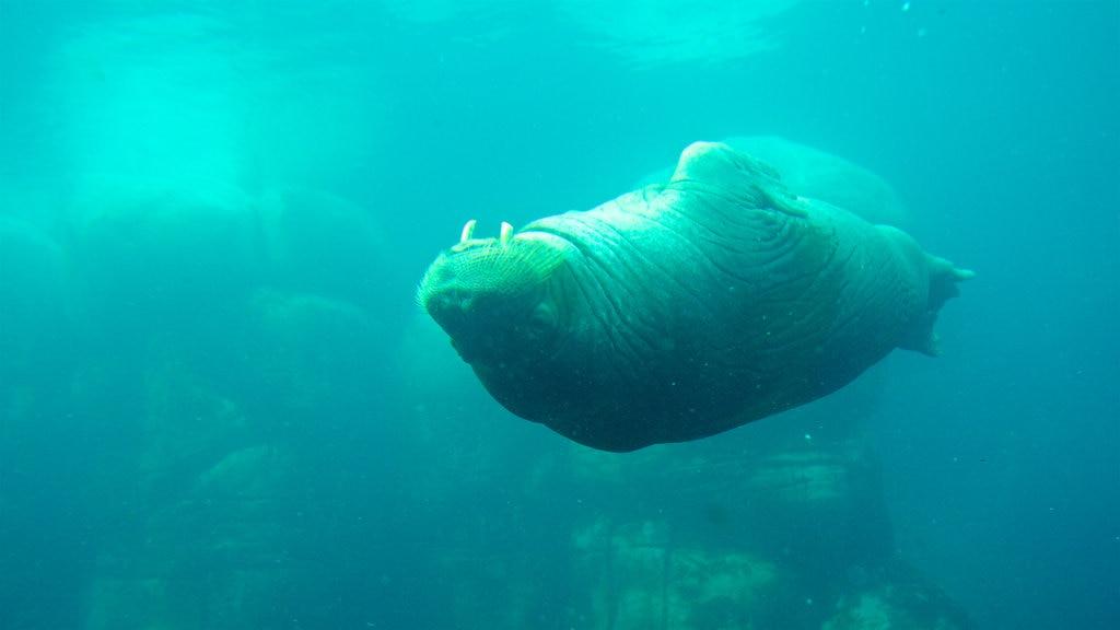 hamburg-aquarium-regentag.jpg?1586347848