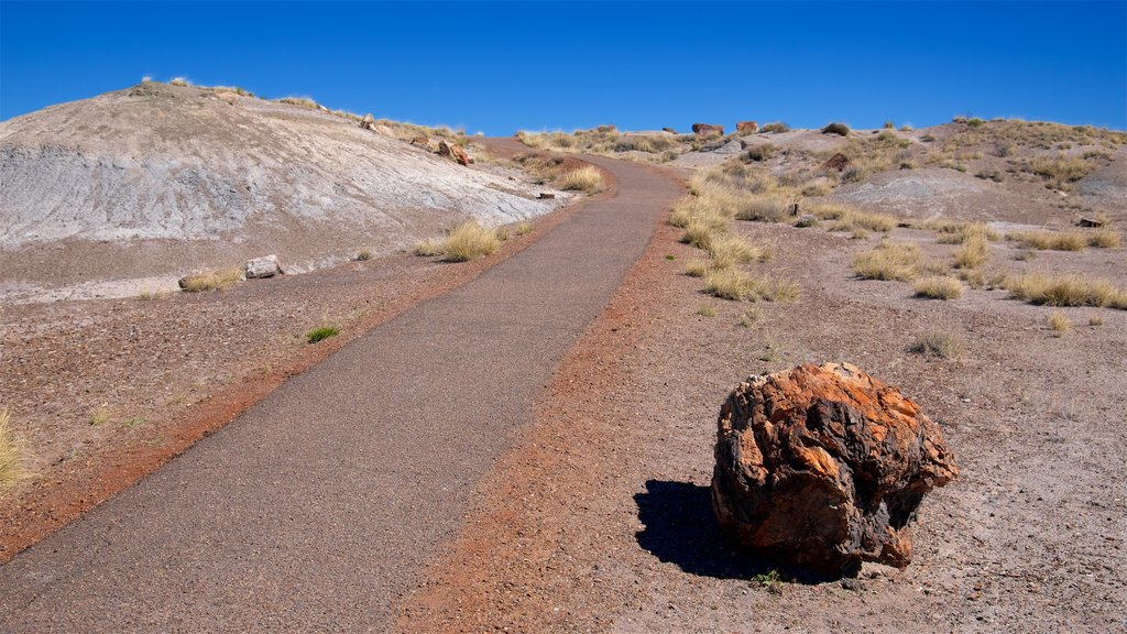 Petrified Forest National Park featuring desert views and tranquil scenes