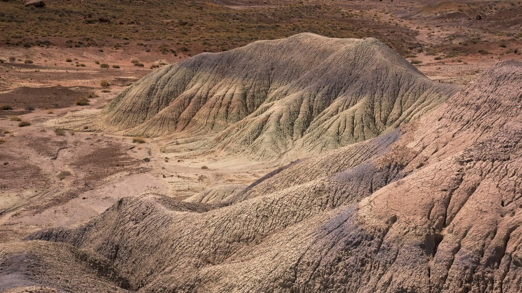 Petrified Forest National Park which includes desert views and tranquil scenes