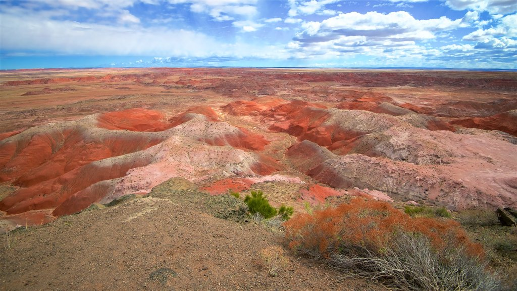 Petrified Forest National Park showing desert views and tranquil scenes