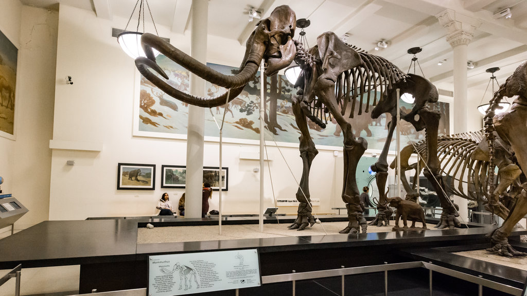 mammoth-squeleton-american-museum-of-natural-history.jpg?1587116169