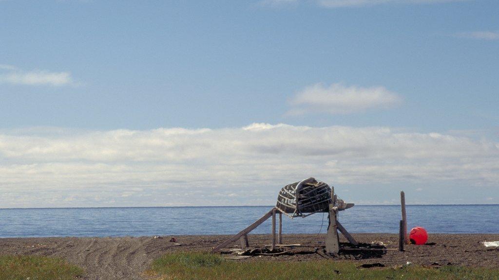 Western Alaska showing a pebble beach