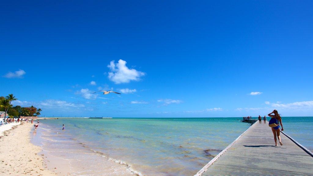 Sul da Flórida mostrando uma baía ou porto e uma praia assim como um pequeno grupo de pessoas