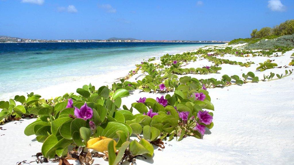 Bonaire mostrando una playa de arena, vistas generales de la costa y flores silvestres